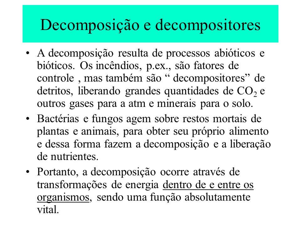 Decomposição e decompositores