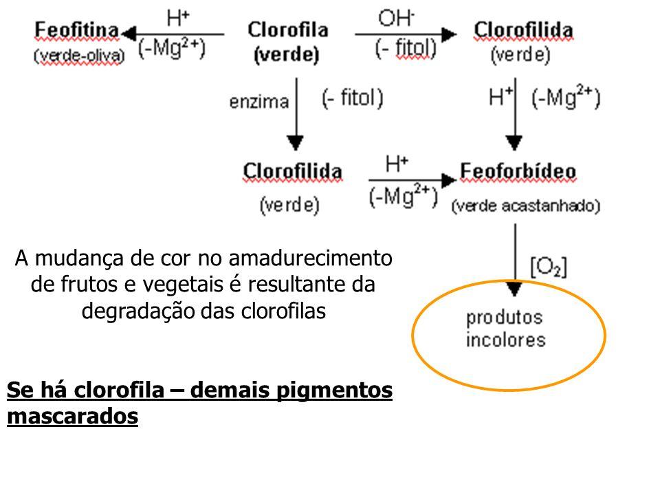 A mudança de cor no amadurecimento de frutos e vegetais é resultante da degradação das clorofilas