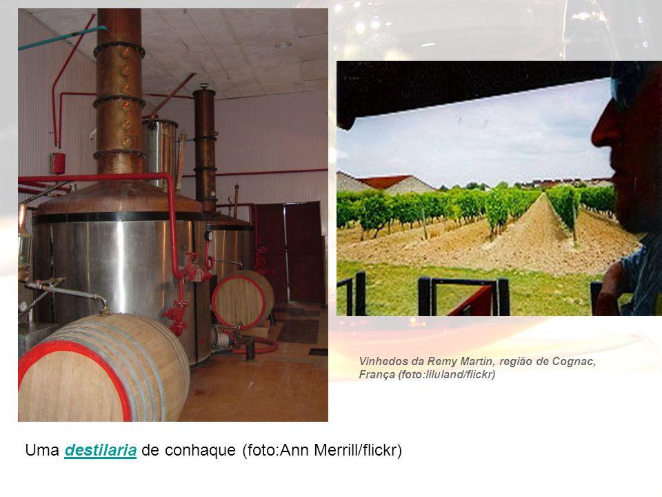 Uma destilaria de conhaque (foto:Ann Merrill/flickr)
