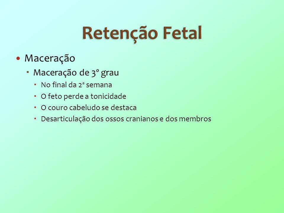 Retenção Fetal Maceração Maceração de 3º grau No final da 2ª semana