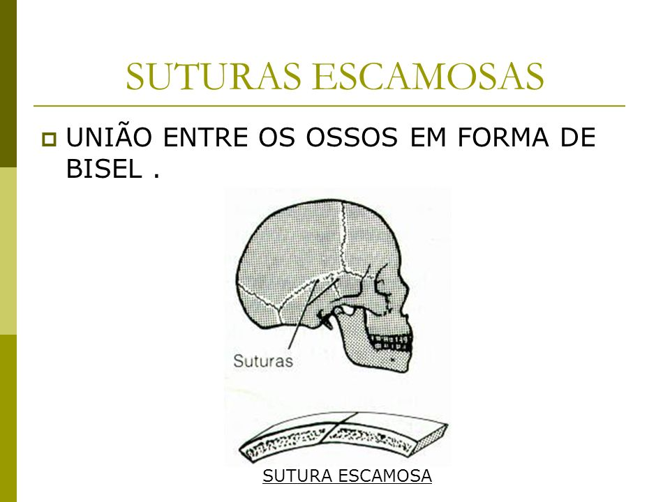 SUTURAS ESCAMOSAS UNIÃO ENTRE OS OSSOS EM FORMA DE BISEL .