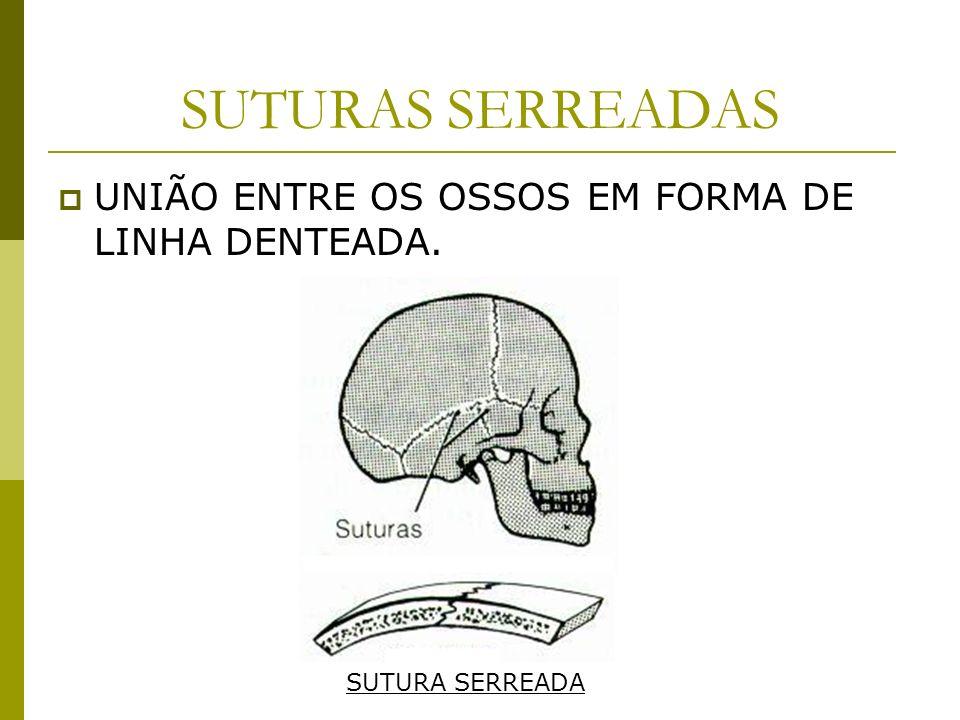 SUTURAS SERREADAS UNIÃO ENTRE OS OSSOS EM FORMA DE LINHA DENTEADA.