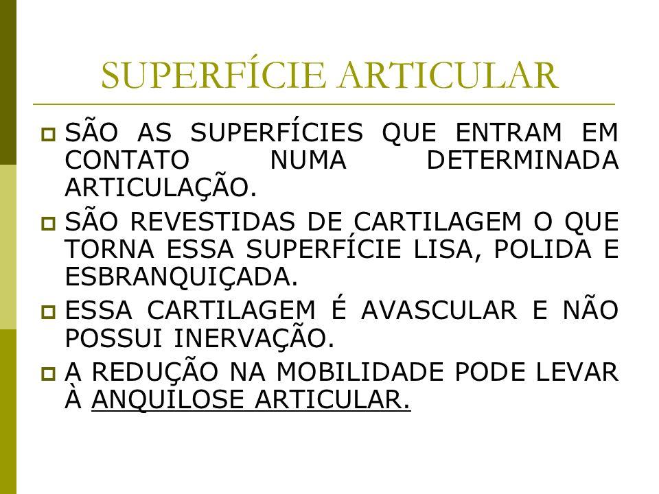 SUPERFÍCIE ARTICULARSÃO AS SUPERFÍCIES QUE ENTRAM EM CONTATO NUMA DETERMINADA ARTICULAÇÃO.