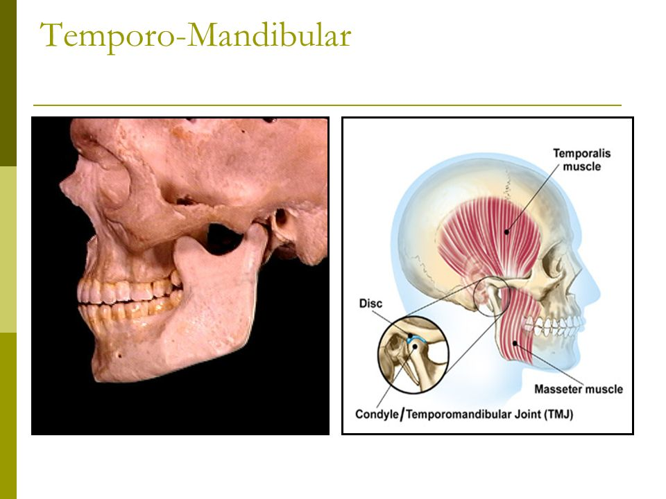 Temporo-Mandibular