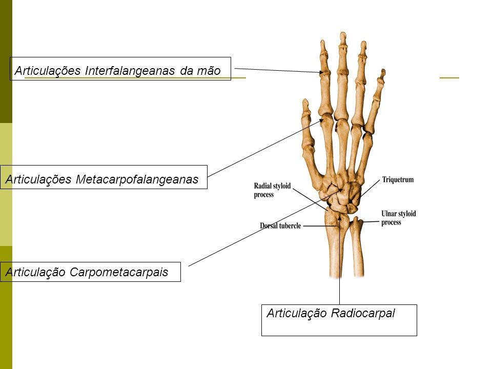 Articulações Interfalangeanas da mão