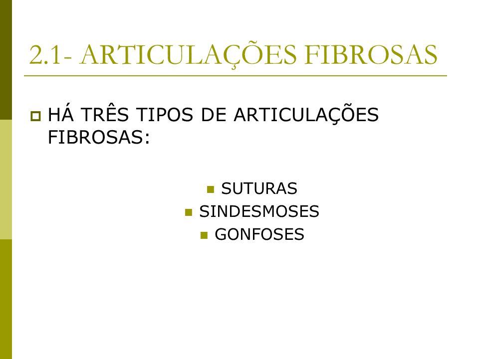 2.1- ARTICULAÇÕES FIBROSAS