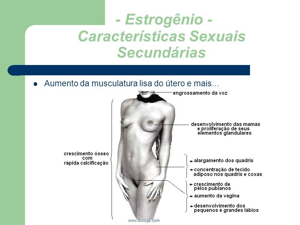 - Estrogênio - Características Sexuais Secundárias
