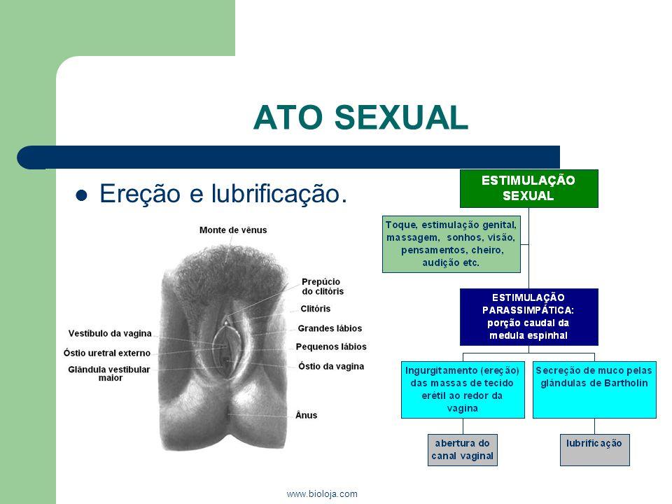 ATO SEXUAL Ereção e lubrificação. www.bioloja.com