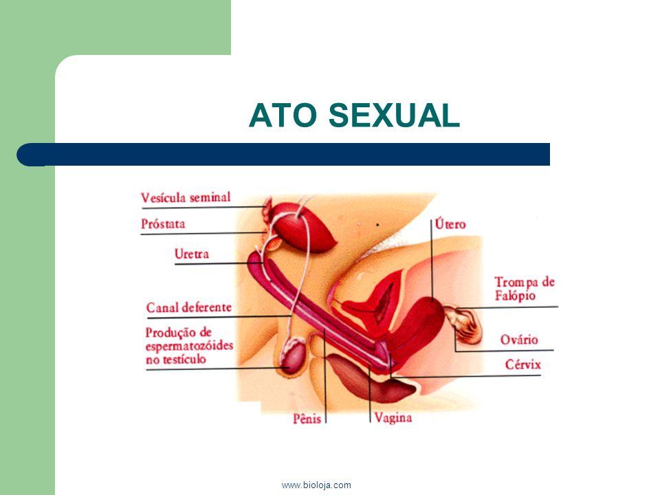 ATO SEXUAL www.bioloja.com