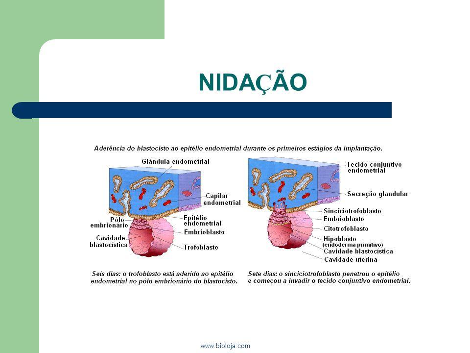 NIDAÇÃO www.bioloja.com