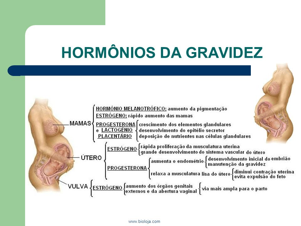 HORMÔNIOS DA GRAVIDEZ www.bioloja.com