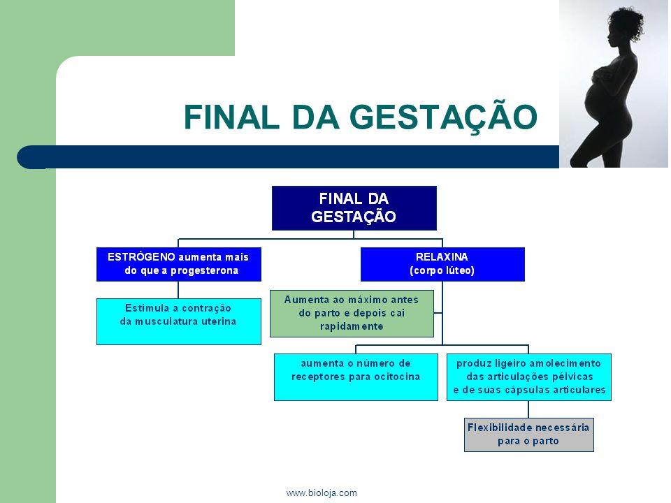 FINAL DA GESTAÇÃO www.bioloja.com