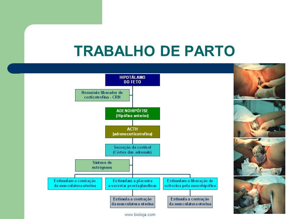 TRABALHO DE PARTO www.bioloja.com