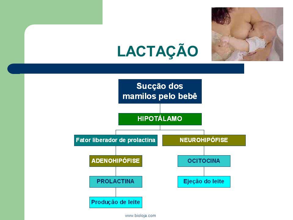 LACTAÇÃO www.bioloja.com