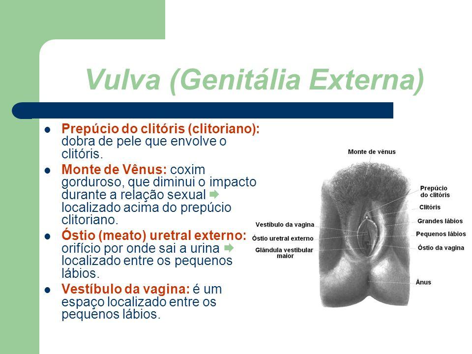 Vulva (Genitália Externa)
