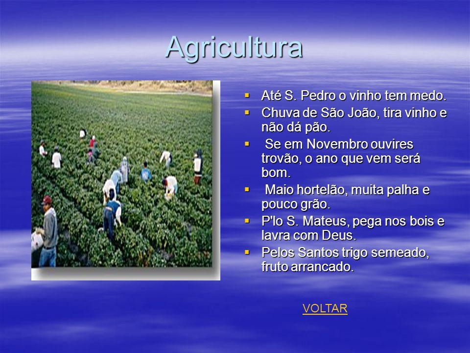 Agricultura Até S. Pedro o vinho tem medo.