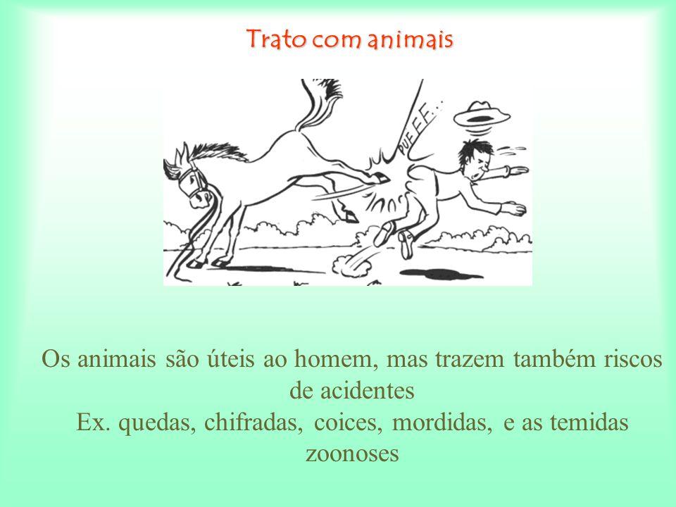 Os animais são úteis ao homem, mas trazem também riscos de acidentes