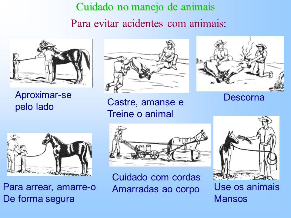 Cuidado no manejo de animais