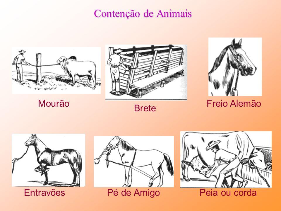 Contenção de Animais Mourão Freio Alemão Brete Entravões Pé de Amigo