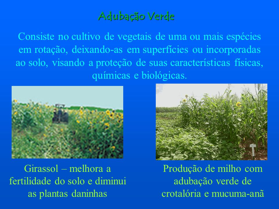Adubação Verde