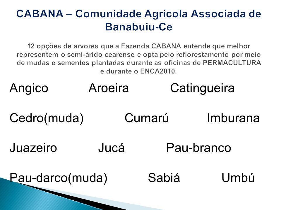 Angico Aroeira Catingueira Cedro(muda) Cumarú Imburana