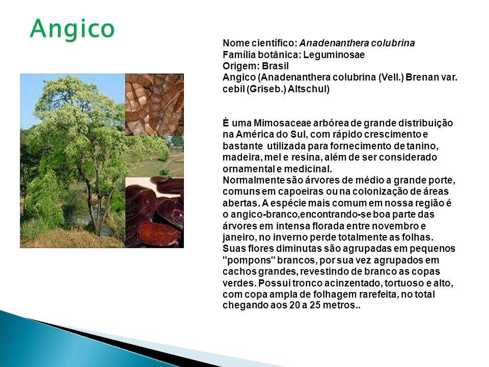 Angico Nome científico: Anadenanthera colubrina Família botânica: Leguminosae Origem: Brasil.