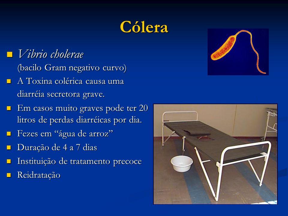 Cólera Vibrio cholerae (bacilo Gram negativo curvo)