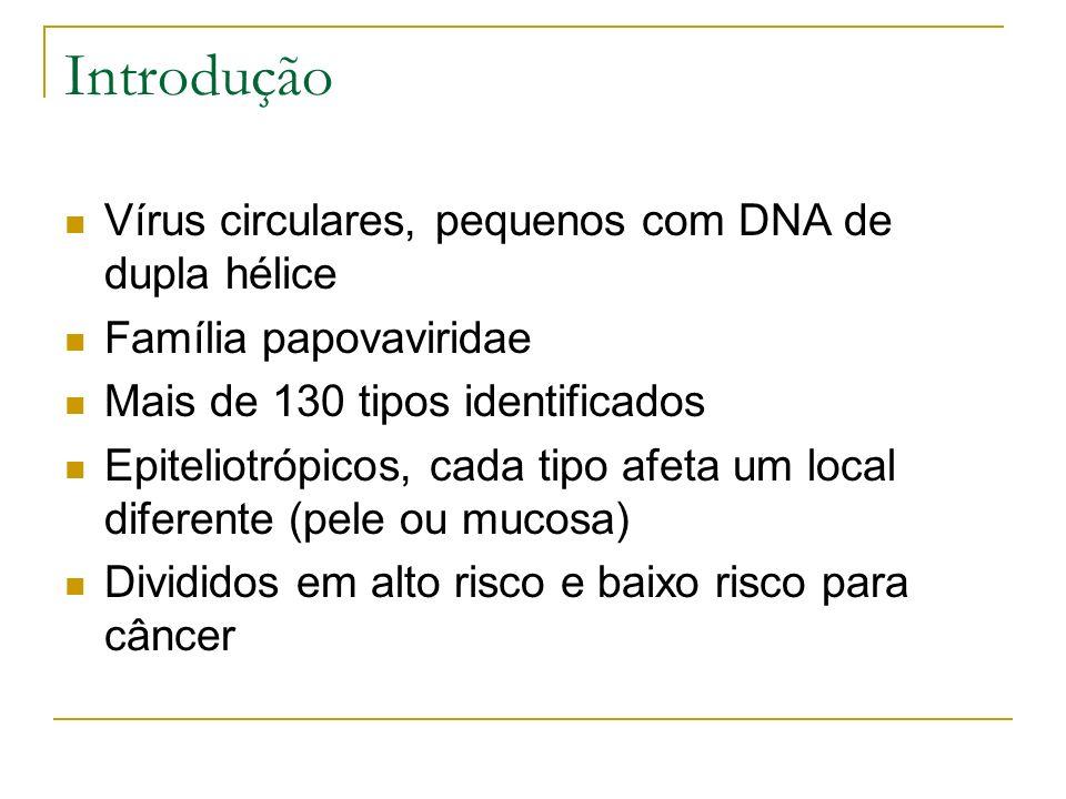 Introdução Vírus circulares, pequenos com DNA de dupla hélice