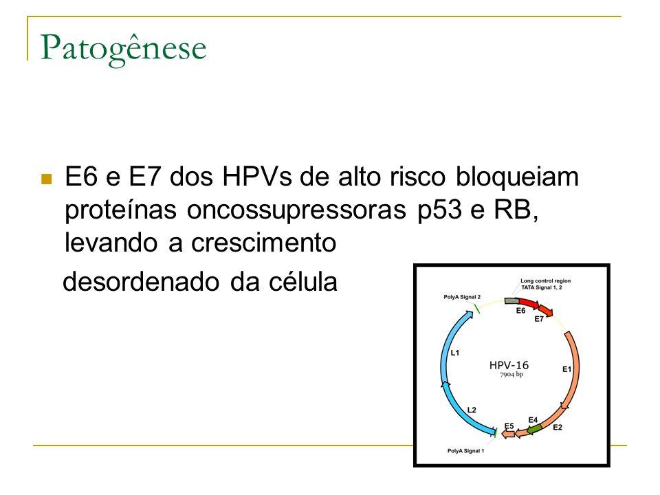 Patogênese E6 e E7 dos HPVs de alto risco bloqueiam proteínas oncossupressoras p53 e RB, levando a crescimento.