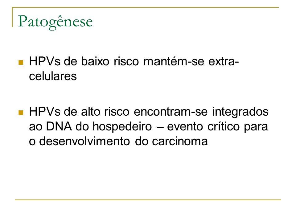 Patogênese HPVs de baixo risco mantém-se extra-celulares