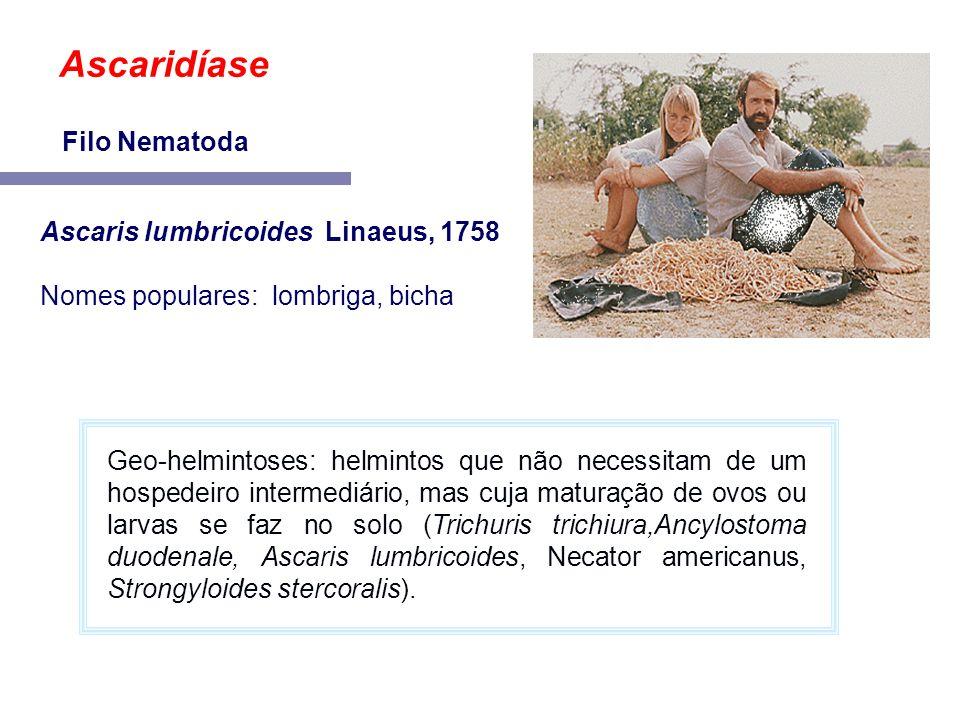 Ascaridíase Filo Nematoda Ascaris lumbricoides Linaeus, 1758