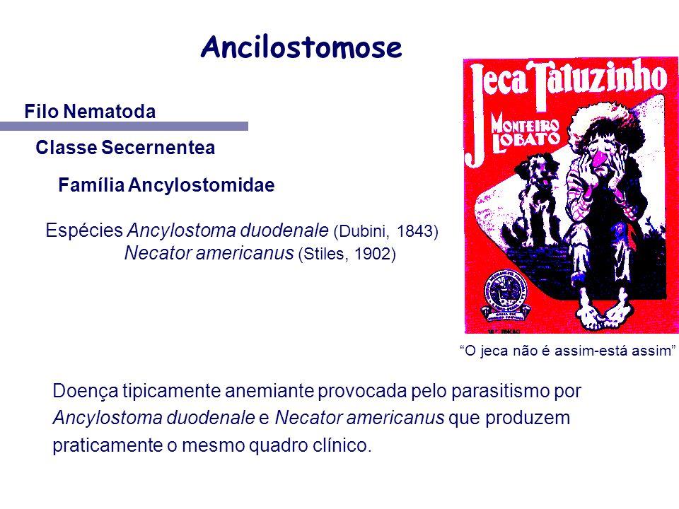 Ancilostomose Filo Nematoda Classe Secernentea Família Ancylostomidae