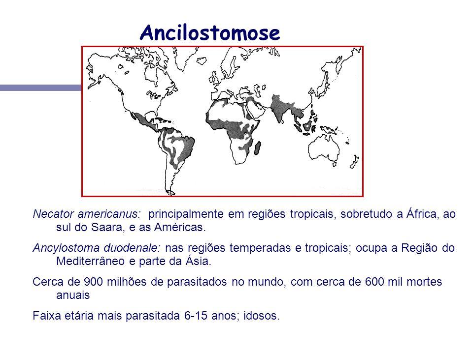 Ancilostomose Necator americanus: principalmente em regiões tropicais, sobretudo a África, ao sul do Saara, e as Américas.