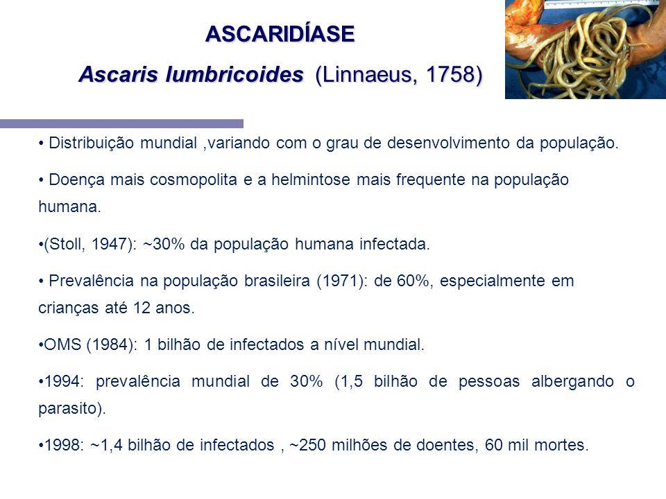 Ascaris lumbricoides (Linnaeus, 1758)