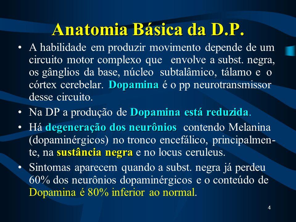 Anatomia Básica da D.P.