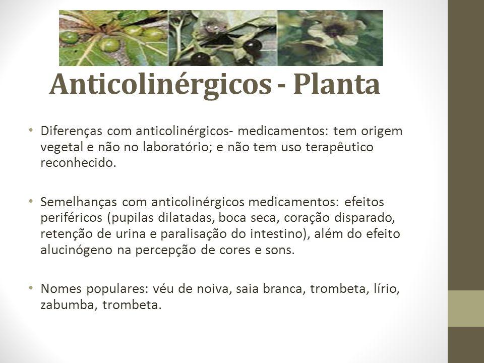 Anticolinérgicos - Planta