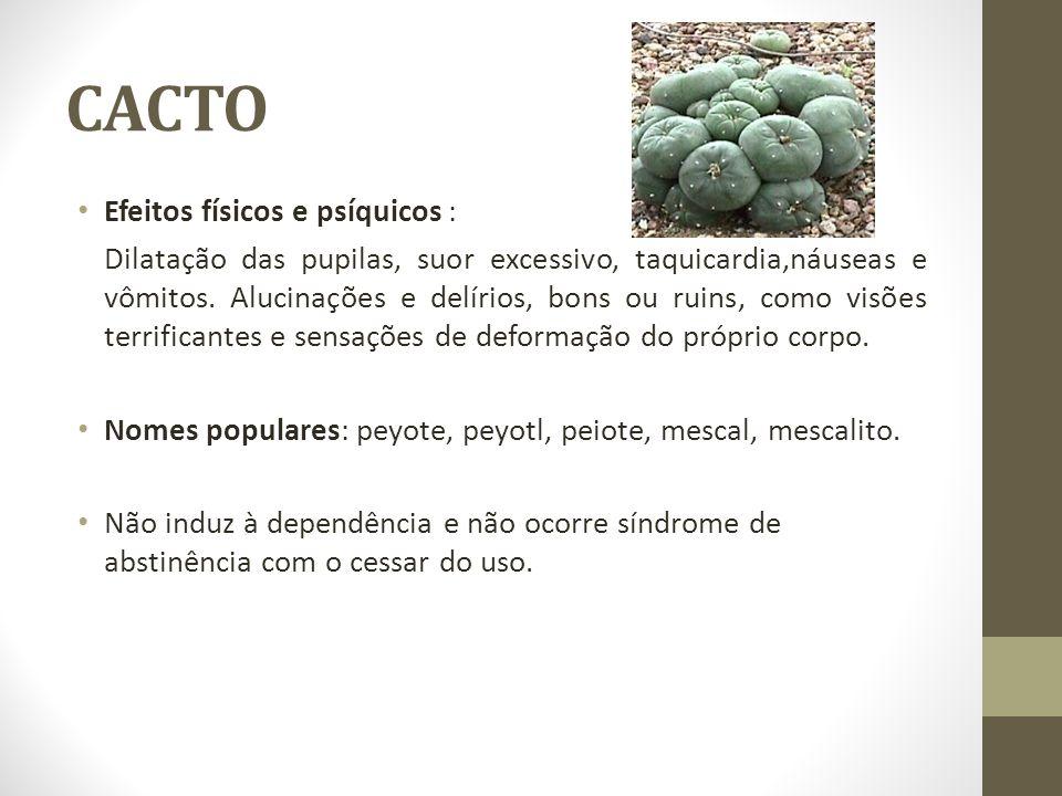 CACTO Efeitos físicos e psíquicos :