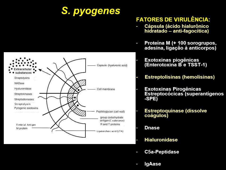 S. pyogenes FATORES DE VIRULÊNCIA: