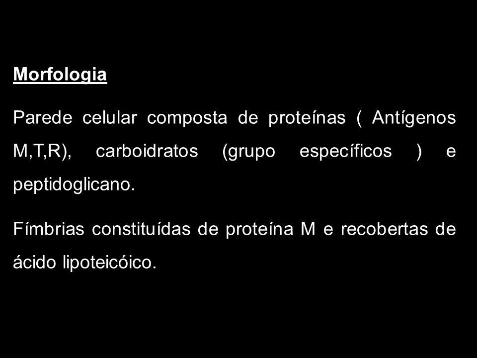 Morfologia Parede celular composta de proteínas ( Antígenos M,T,R), carboidratos (grupo específicos ) e peptidoglicano.