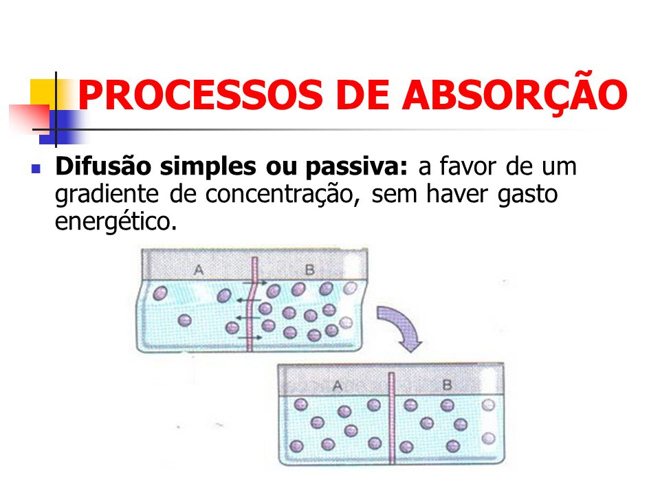 PROCESSOS DE ABSORÇÃO Difusão simples ou passiva: a favor de um gradiente de concentração, sem haver gasto energético.