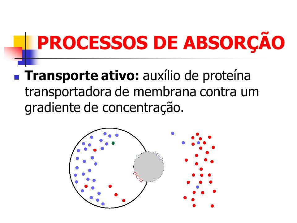 PROCESSOS DE ABSORÇÃO Transporte ativo: auxílio de proteína transportadora de membrana contra um gradiente de concentração.