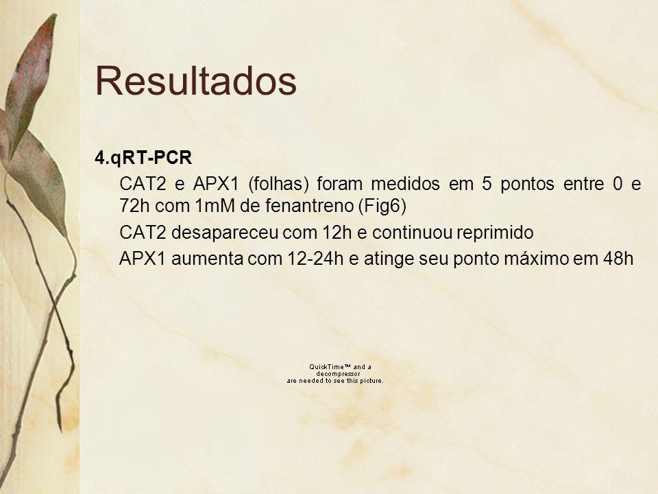 Resultados 4.qRT-PCR. CAT2 e APX1 (folhas) foram medidos em 5 pontos entre 0 e 72h com 1mM de fenantreno (Fig6)
