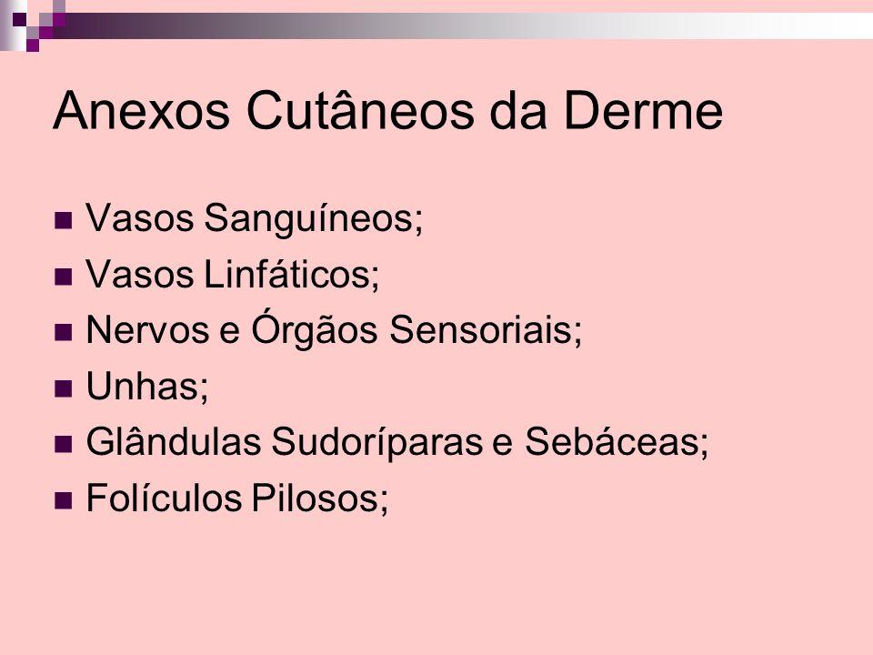 Anexos Cutâneos da Derme
