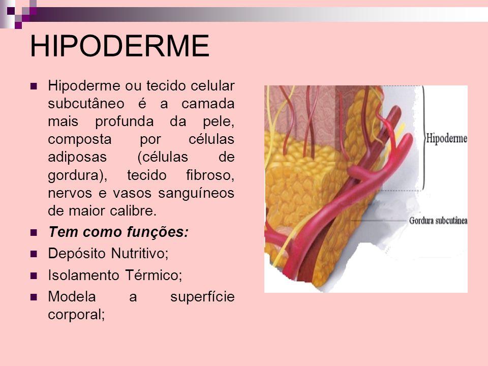HIPODERME