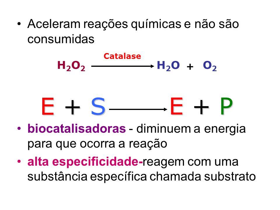 E + S E + P Aceleram reações químicas e não são consumidas