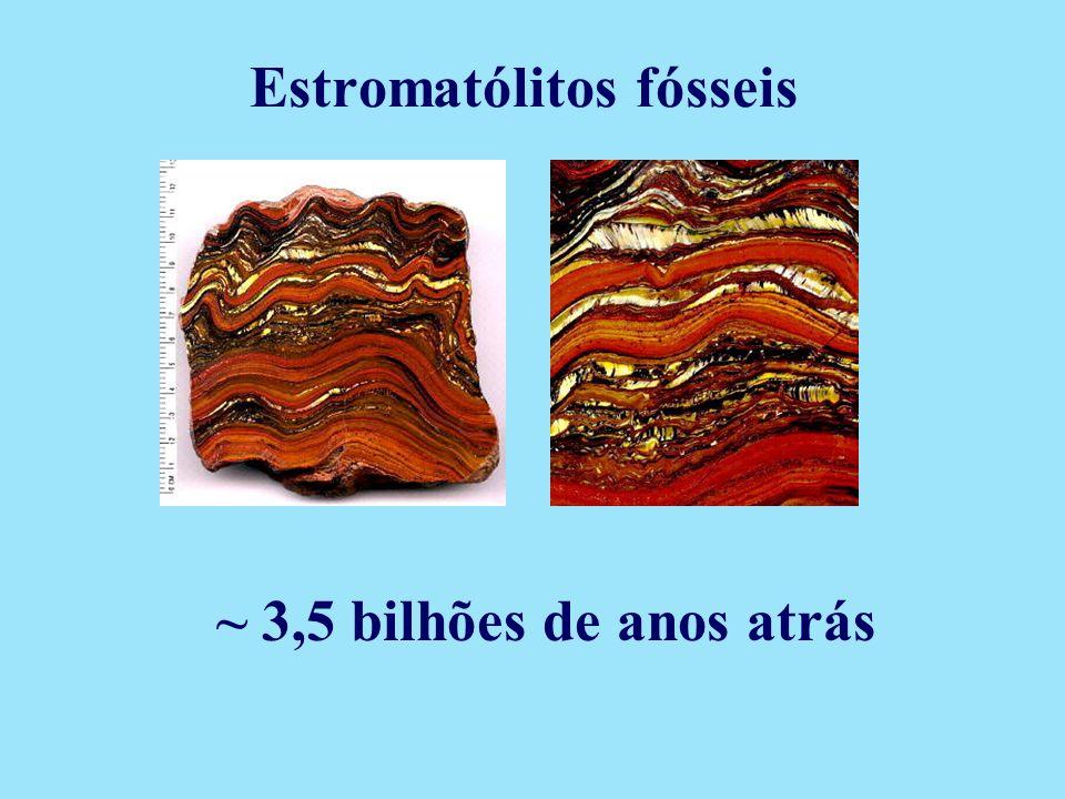 Estromatólitos fósseis