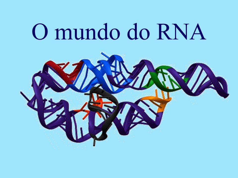 O mundo do RNA