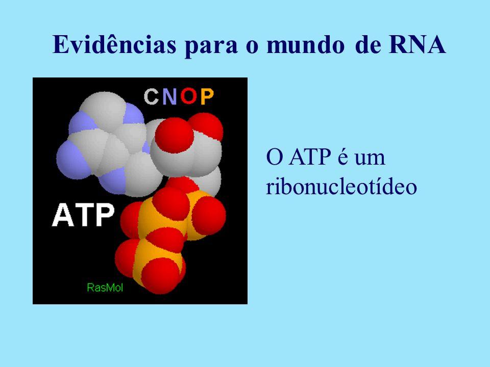 Evidências para o mundo de RNA