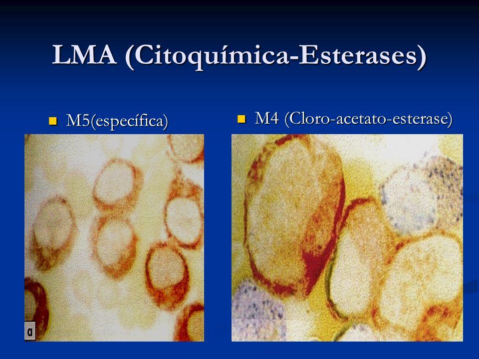 LMA (Citoquímica-Esterases)