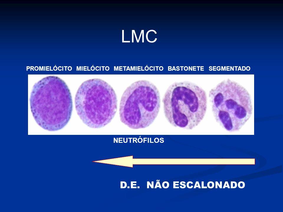 LMC D.E. NÃO ESCALONADO NEUTRÓFILOS